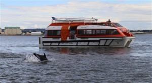 Delphin vor Tenderboot